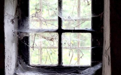 If the inside or outside of your home looks like you started decorating for Halloween early, you may have a problem.